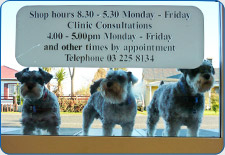 General and small animal veterinary services offered at Otautau Vets Pty Ltd